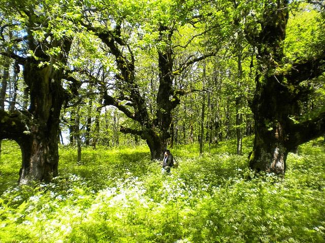 nature reserve malabotta